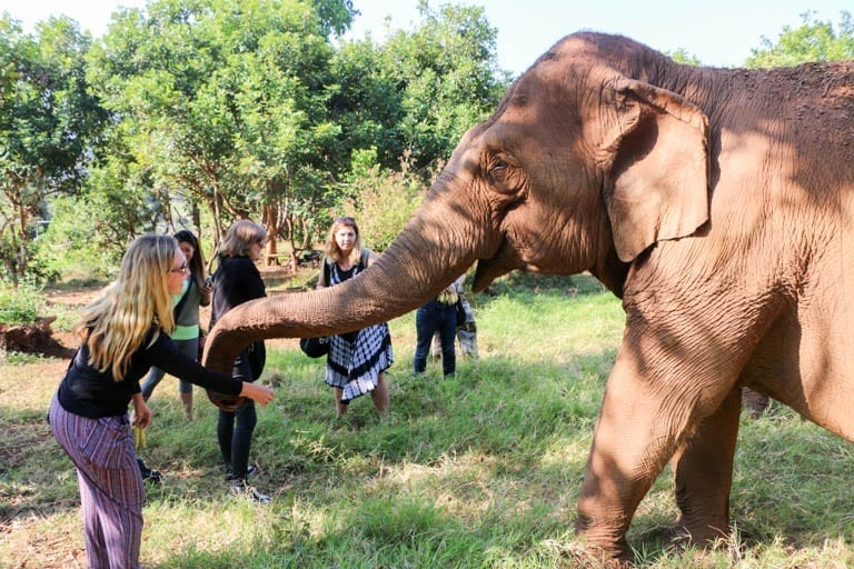 Feeding elephants at an ethical elephant sanctuary in Thailand.