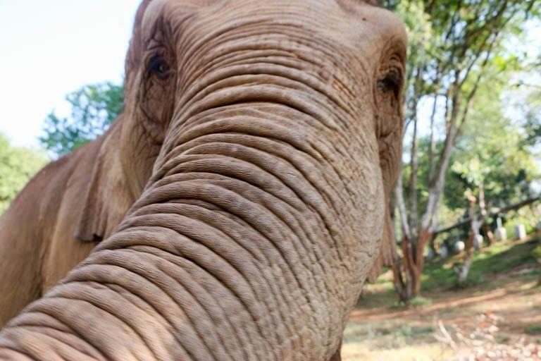 Elephant selfie