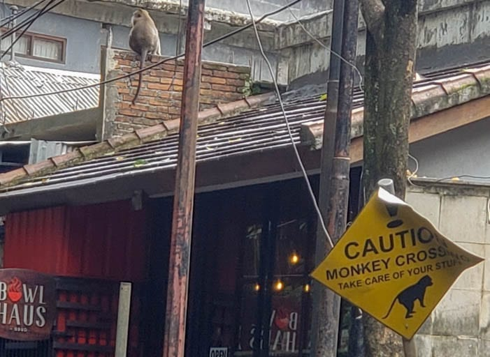 A Monkey Crossing is part of life in the Ubud Monkey Forest