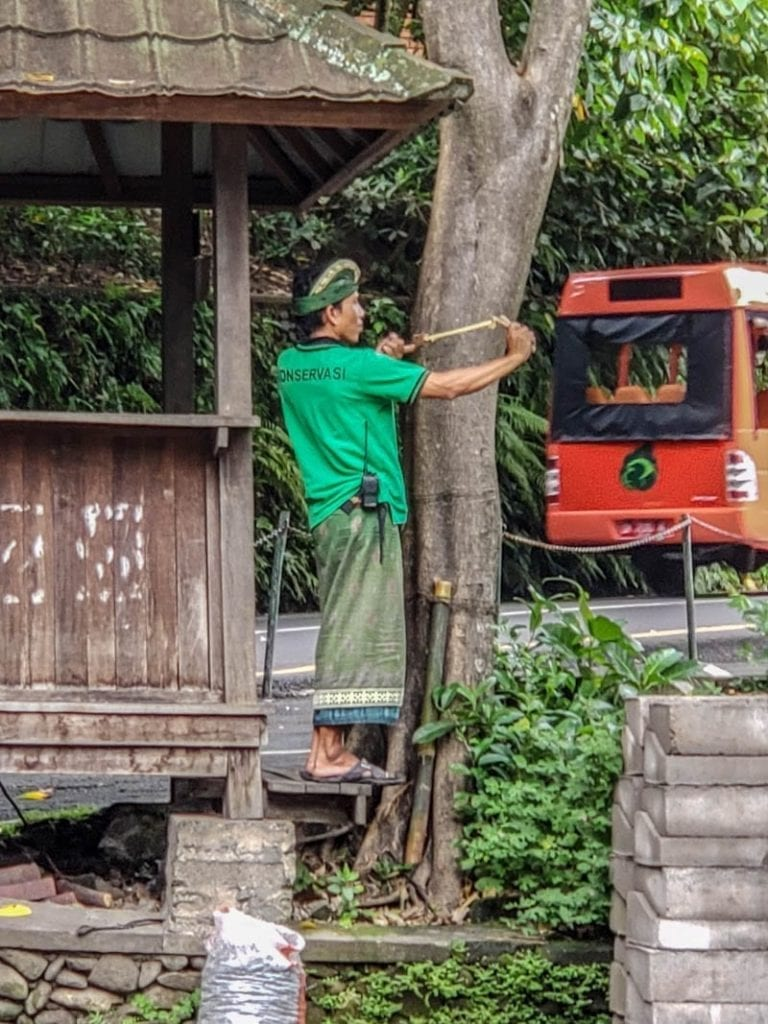 The slingshot guard is a profession and a way of life in the Ubud Monkey Forest!