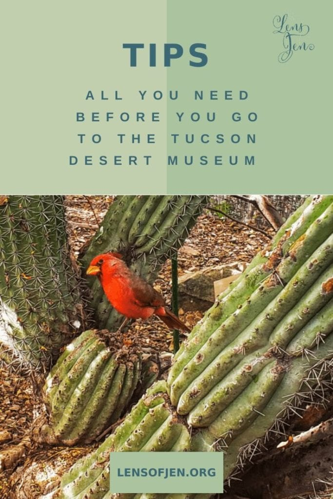 How to Visit the Sonoran Desert Museum