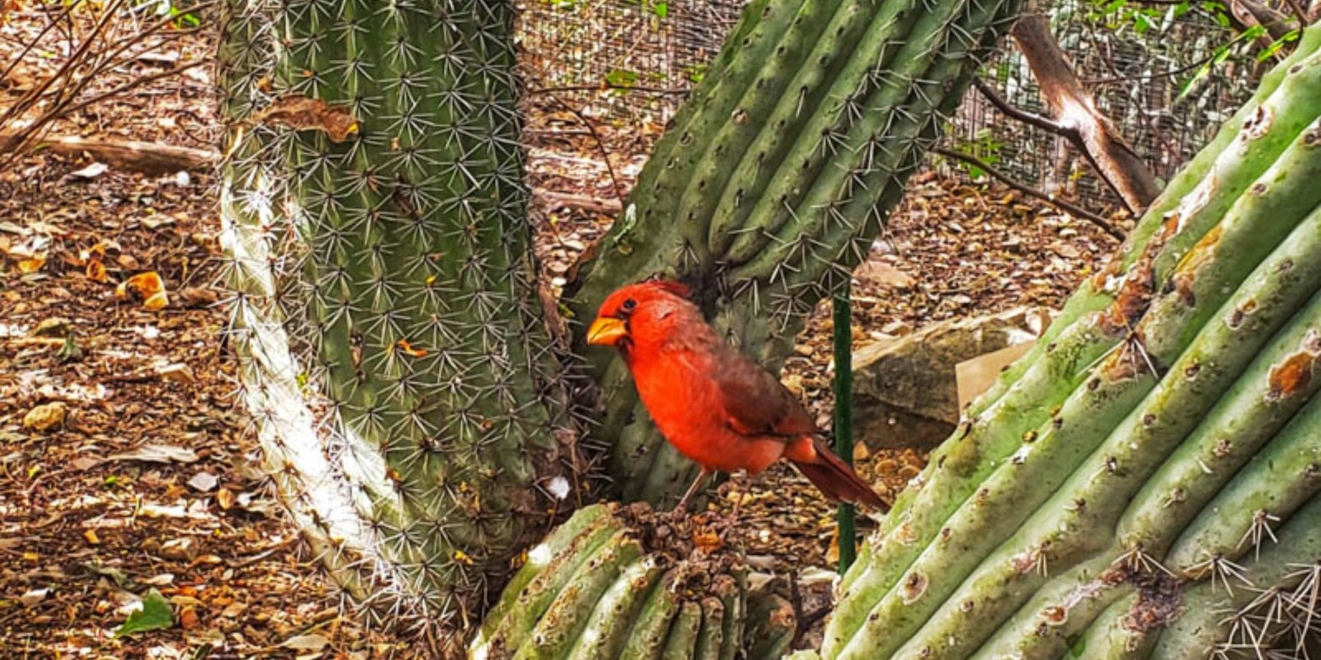 Sonoran Desert Museum