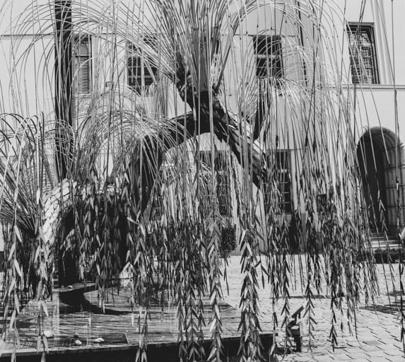 Weeping Willow Tree on Dohány Street to remember the victims of WWII in Budapest