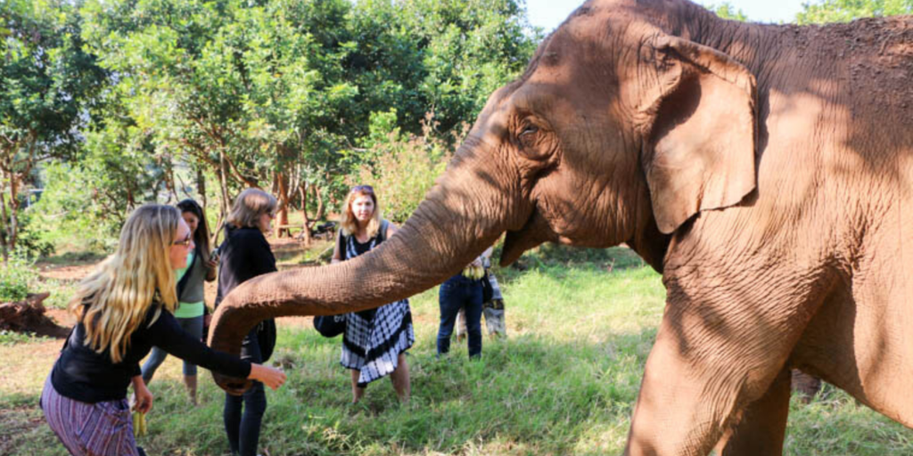 An overnight tour at an elephant sanctuary allowed me to travel deeper in Thailand.