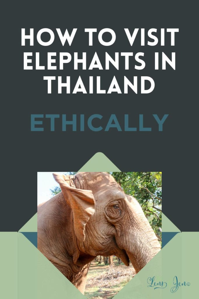 How to Help Elephants & Visit Elephants ETHICALLY