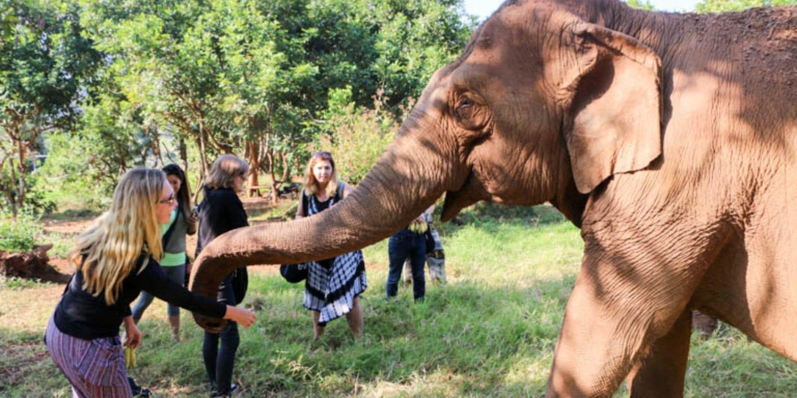 Feeding elephants at an ethical elephant sanctuary
