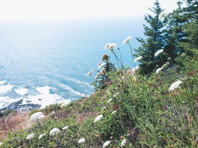 Wildflowers at Cape Perpetua