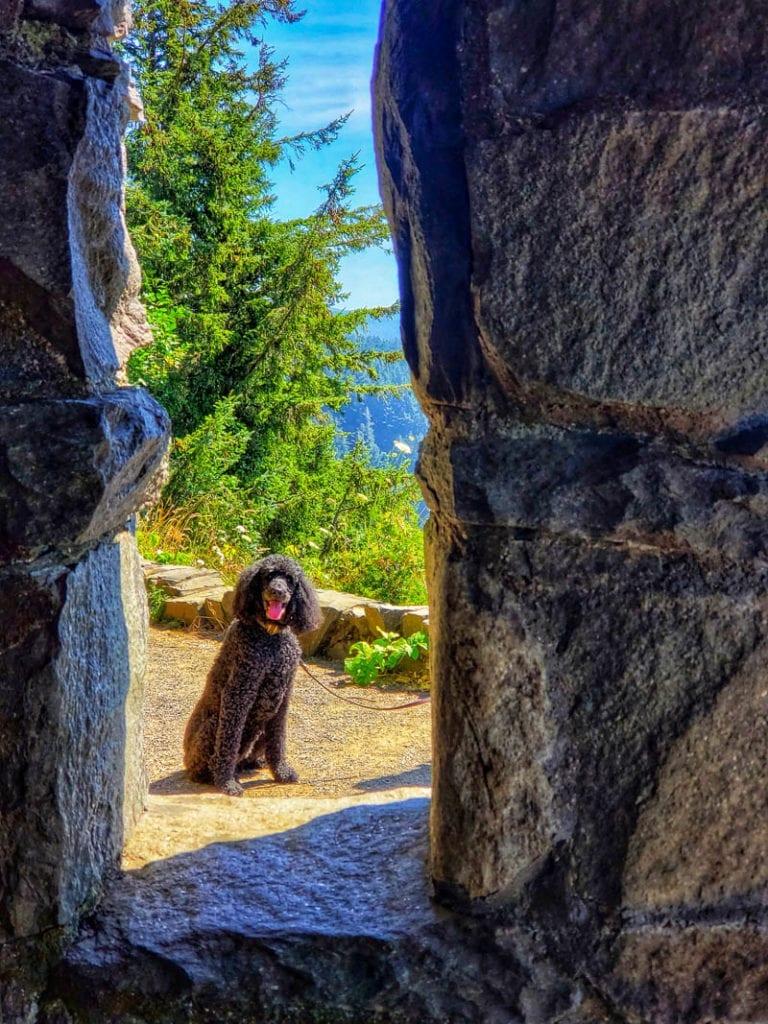 A dog at the rock shetler at cape perpetua