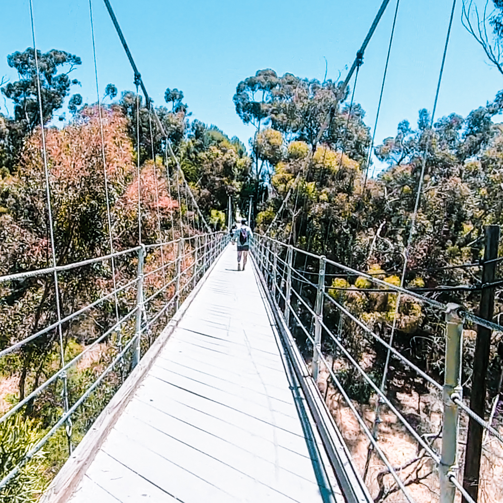 The spruce street suspension bridge