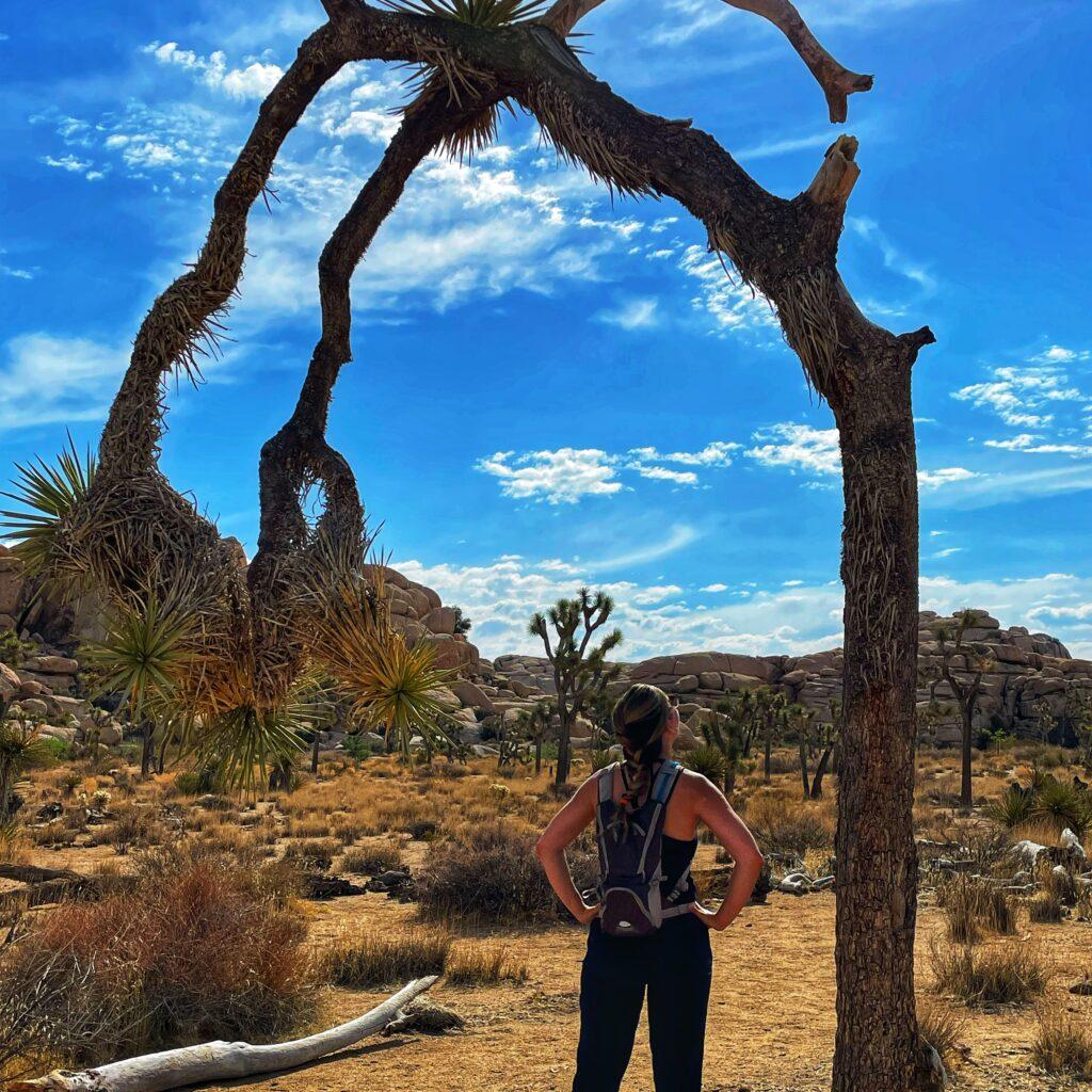 A Joshua Tree on the Barker Dam Trail at Joshua Tree