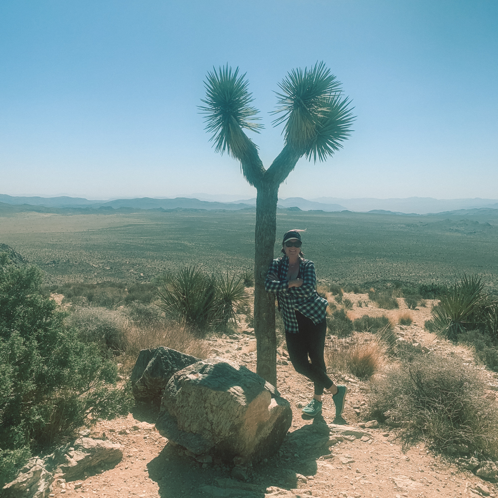 Lost Palm Oasis at Joshua Tree National Park
