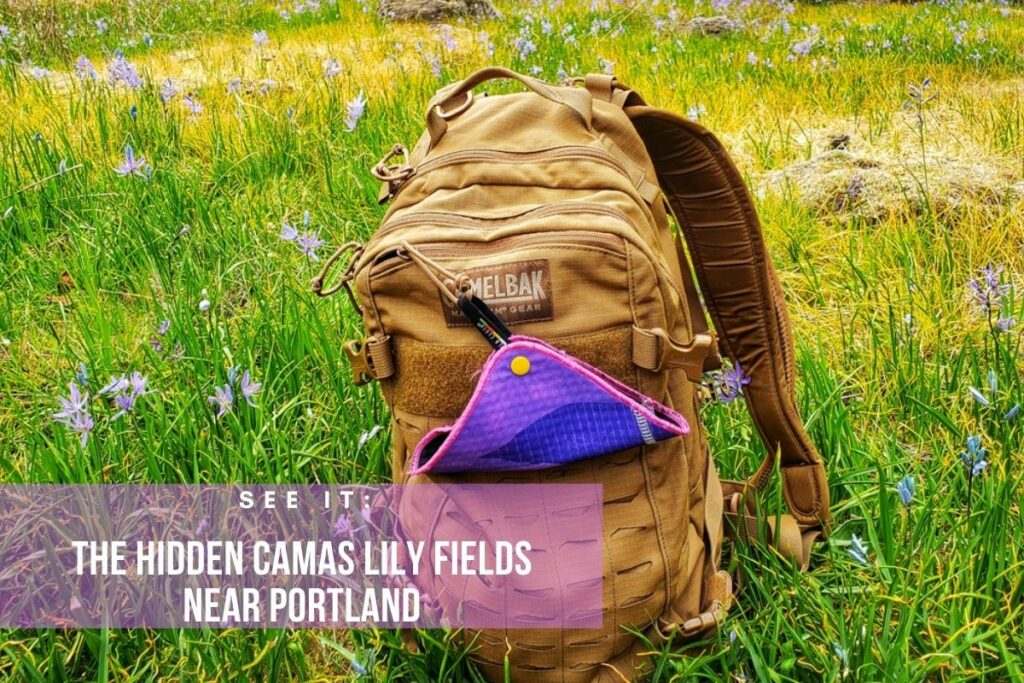 The hidden camas lily fields is one of the best hikes near Portland