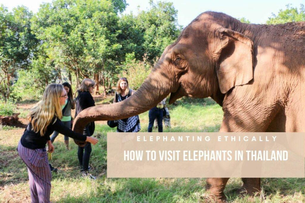 elephanting ethically